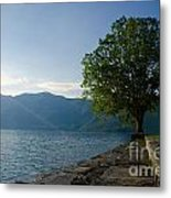Tree On The Lake Front Metal Print