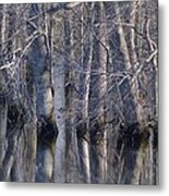Tree Reflection Abstract Metal Print