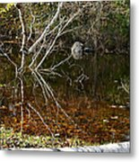Tree Reflections Stoney Creek Metal Print