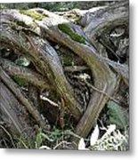 Tree Roots2 Metal Print