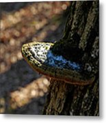 Tree Shelf Snow Sprinkled Fungus Metal Print