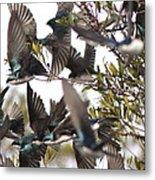 Tree Swallow Frenzy Metal Print
