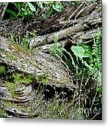 Tree Trunk And Ferns Metal Print