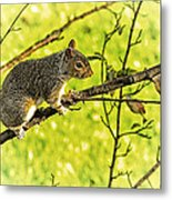 Tree Visitor Metal Print