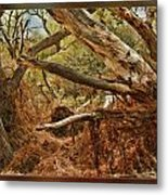 Tree Woods Metal Print