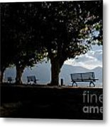 Trees And Benches Metal Print