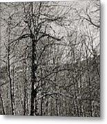 Trees And Hillside Metal Print