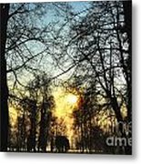 Trees And Sun In A Foggy Day Metal Print