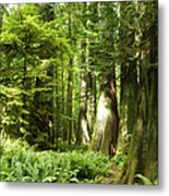 Trees At Cathedral Grove Metal Print