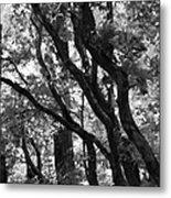 Trees Beautiful Trees Metal Print