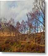 Trees Below Stob Dearg Metal Print by Gary Eason