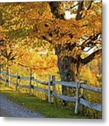 Trees In Autumn Colours And A Fence Metal Print