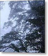 Trees In Fog 2  Metal Print