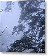 Trees In Fog 3  Metal Print