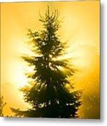 Trees In Fog At Sunrise Metal Print