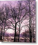 Trees In Glorious Calm Metal Print