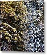 Trees In Taos Village Metal Print