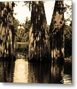 Trees In The Basin Metal Print
