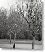 Trees In The Mist 2 Metal Print