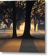 Trees In The Morning Mist Metal Print by Jeremy Woodhouse