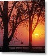 Trees In The Sunrise Metal Print