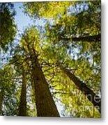 Trees Of Devoto Metal Print