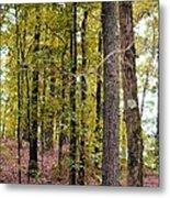 Trees Of Golden Hues Metal Print