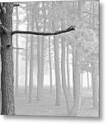 Trees On A Foggy  Morning Metal Print