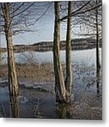 Trees On Flooded Riverbank No.1001 Metal Print