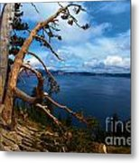 Trees On The Crater Metal Print