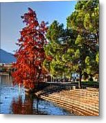 Trees On The Lake Front In Autumn Metal Print