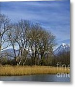Trees On The Lakefront Metal Print