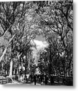 Trees On The Mall In Central Park In Black And White Metal Print