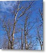 Trees With Cotton Cloud Metal Print