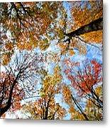 Treetops Metal Print by Elena Elisseeva