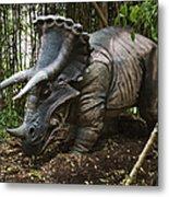 Triceratops Metal Print
