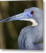 Tricolored Heron Metal Print