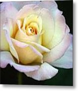 Trilogy Of A Rose- Day Two Metal Print
