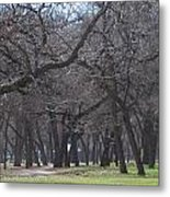 Trinity Park Ft Worth Tx Metal Print