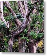 Triplet Trees Metal Print by Beverly Hammond