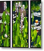 Triptych Of Water Hyacinth Metal Print