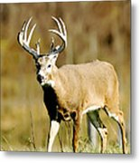 Trophy Buck Metal Print