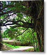 Tropical Banyan Path Metal Print