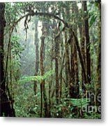 Tropical Cloud Forest Metal Print