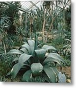 Tropical Conservatory, Kew Gardens Metal Print