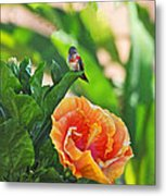 Tropical Hummer Metal Print