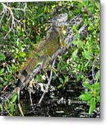 Tropical Iguana Metal Print