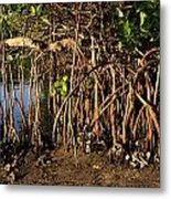 Tropical Mangroves Metal Print