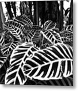 Tropical Plants On The Rainforest Floor Metal Print by Melinda Podor