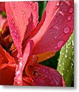 Tropical Rose Canna Lily Metal Print